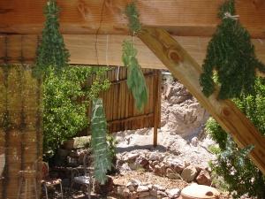 herbs hanging